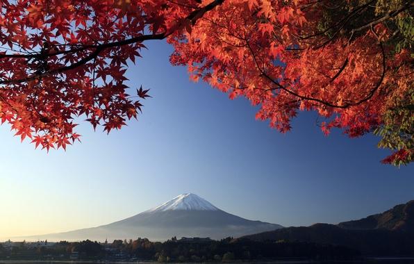 Картинка осень, ветки, дерево, гора, вулкан, Япония, Фудзияма