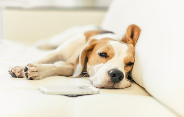 Картинка собака, щенок, puppy, dog, домашнее животное, dogs, beagle, снуппи, pup, snoopy, снупи, бигь