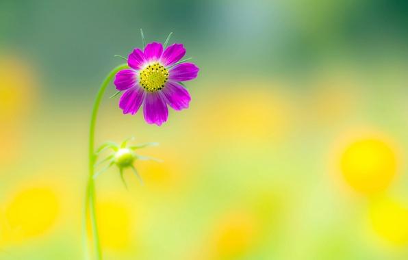 скачать программу цветок - фото 10