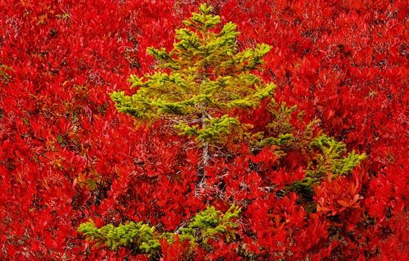 Картинка осень, лес, деревья, краски, цвет, склон, сосна