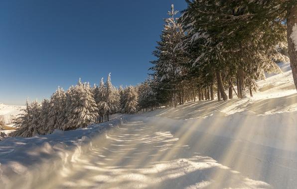 Картинка зима, дорога, снег, пейзаж, природа, утро