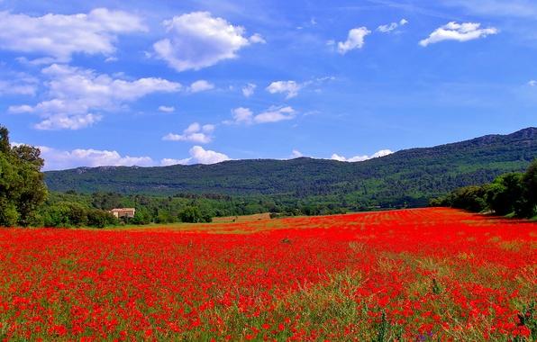 Картинка поле, деревья, цветы, горы, дом, холмы, Франция, маки, луг