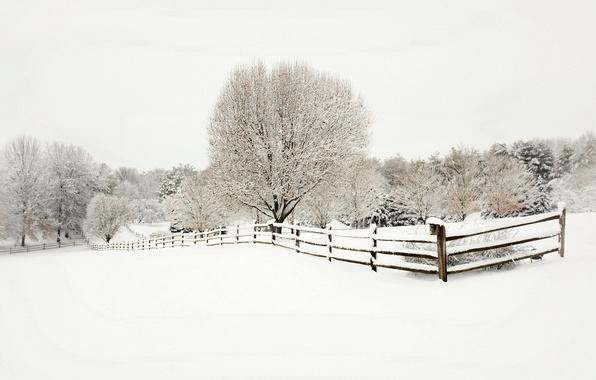 Картинка зима, снег, деревья, пейзаж, природа, забор, ограда, ели, деревянный, ёлки