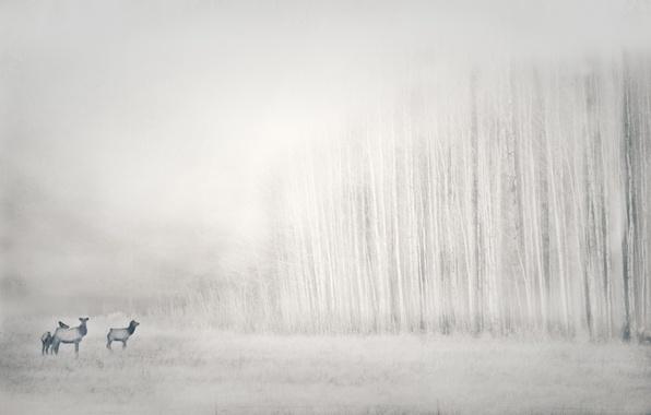 Картинка природа, фон, олени