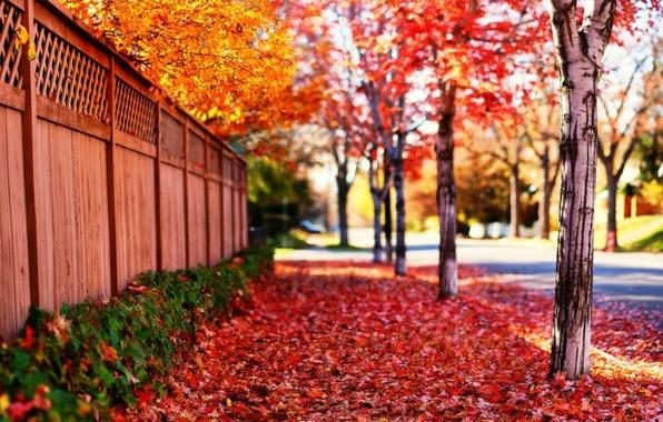 Картинка дорога, листья, солнце, деревья, пейзаж, цветы, природа, фон, дерево, забор, красота, весна, листопад, лучи солнца, …
