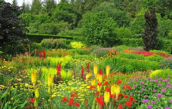 Картинка зелень, лето, трава, деревья, цветы, парк, сад, Великобритания, Devon, разноцветные, кусты