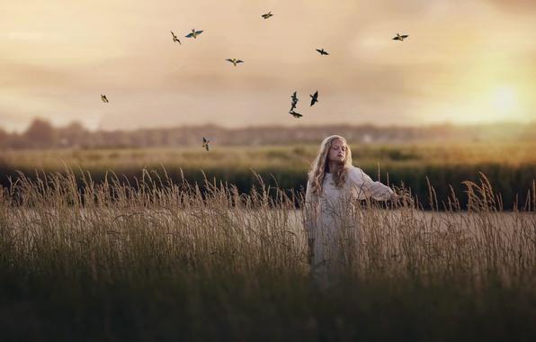 Картинка поле, вечер, девочка