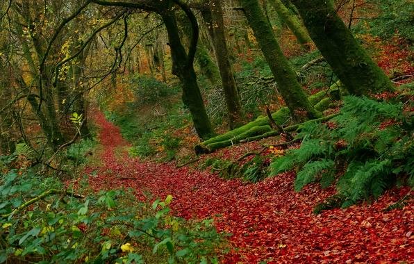 Картинка осень, лес, листья, деревья, Англия, England, Exmoor National Park, Buckethole Woods, Национальный парк Эксмур