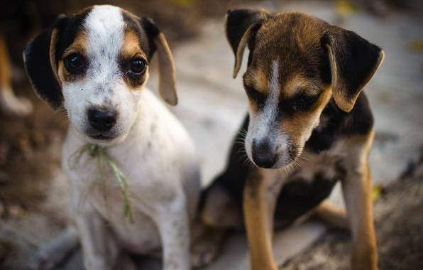 Картинка животное, собака, дружба, милый, щенок, puppy, dog, animal, friendship, cute