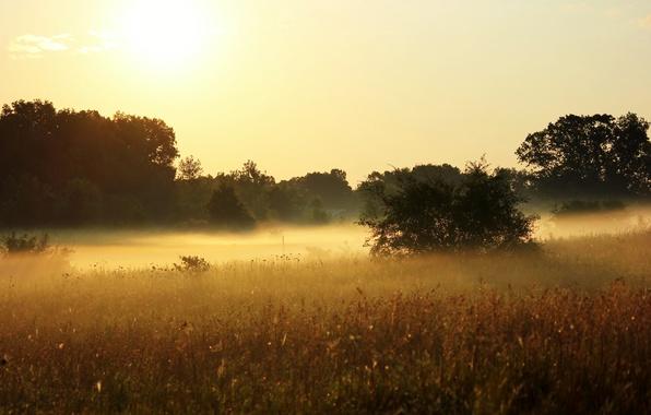 Картинка лето, солнце, деревья, природа, туман, растения, утро, луг, травы, кусты, небосклон, зной