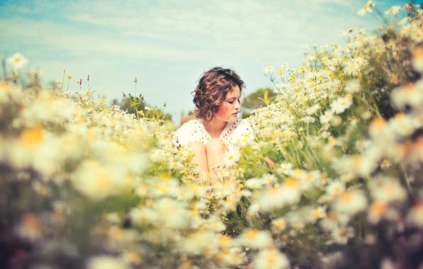 Картинка поле, лето, девушка, солнце, настроение, ромашки