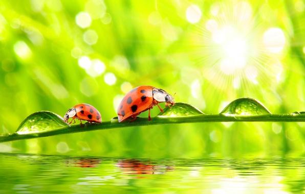 Картинка grass, nature, water, macro, morning, drops, dew, ladybugs