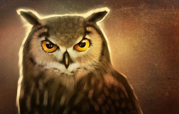 Картинка глаза, взгляд, клюв, art, сова птица