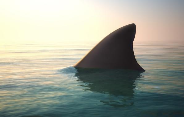 Картинка ocean, water, shark fin