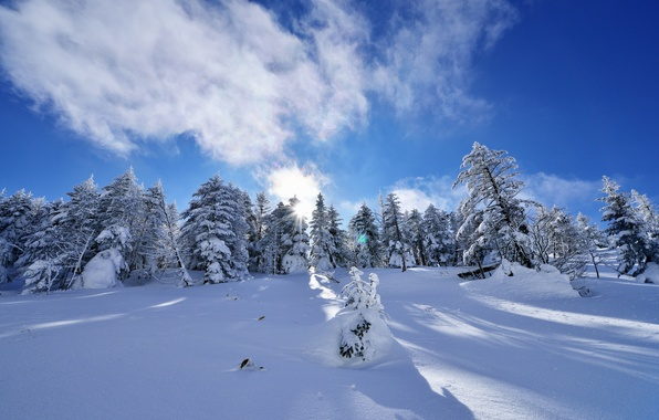 Картинка зима, небо, облака, снег, деревья, ель, склон