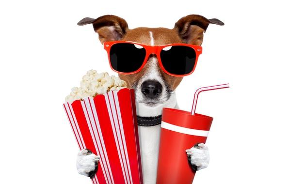 Картинка юмор, очки, белый фон, трубочка, напиток, попкорн, стаканчики, Джек-рассел-терьер