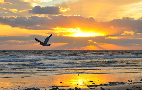 Картинка песок, море, волны, пляж, небо, солнце, полет, пейзаж, закат, тучи, природа, камни, птица, крылья, горизонт, ...
