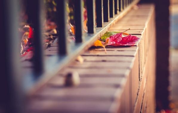 Картинка осень, листья, макро, природа, забор, ограда, прутья