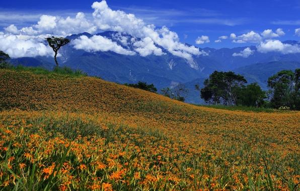 Картинка небо, облака, деревья, цветы, горы, луг