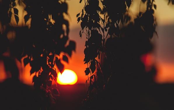 Обои картинки фото солнце закат