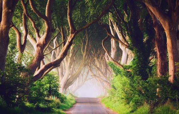 Картинка деревья, туман, утро, Северная Ирландия, графство Антрим, дорога Bregagh Road, Баллимони, Темная аллея
