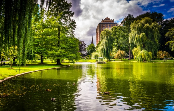 Картинка зелень, трава, деревья, пруд, парк, утки, дома, США, Boston, Massachusetts