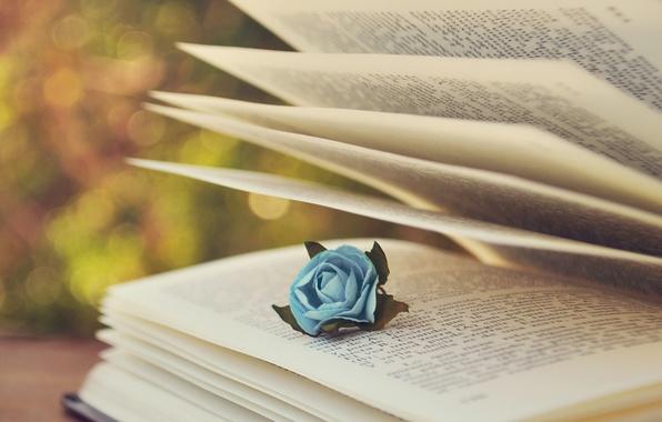 Картинка текст, роза, книга, страницы, голубая, боке