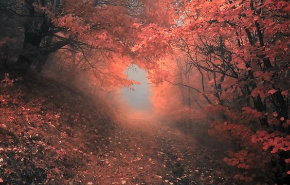 Картинка осень, лес, деревья, туман, Природа, forest, листопад, роща, тропинка, trees, nature, autumn, leaves, fog, path, …