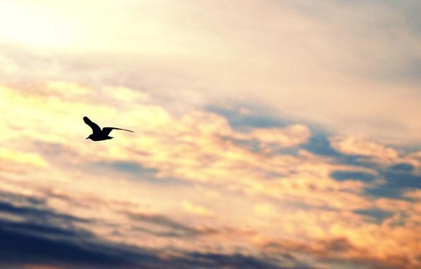 Картинка небо, свобода, облака, полет, фон, widescreen, птица, обои, настроения, крылья, чайка, силуэт, wallpaper, sky, широкоформатные, …