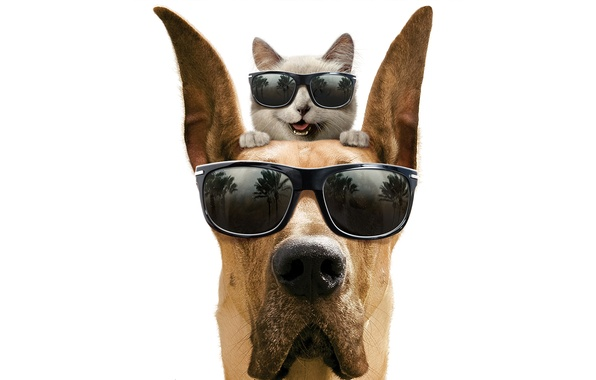 Картинка кот, улыбка, собака, очки, белый фон, дог, мармадюк, Marmaduke