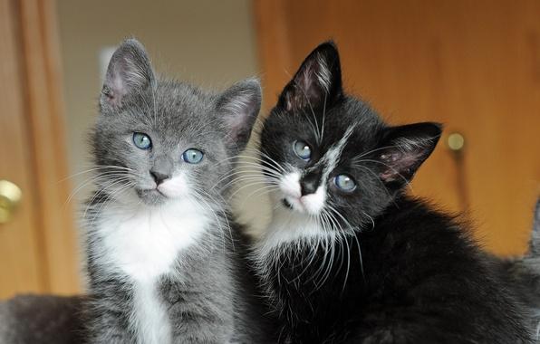 Милые котята обои на рабочий стол