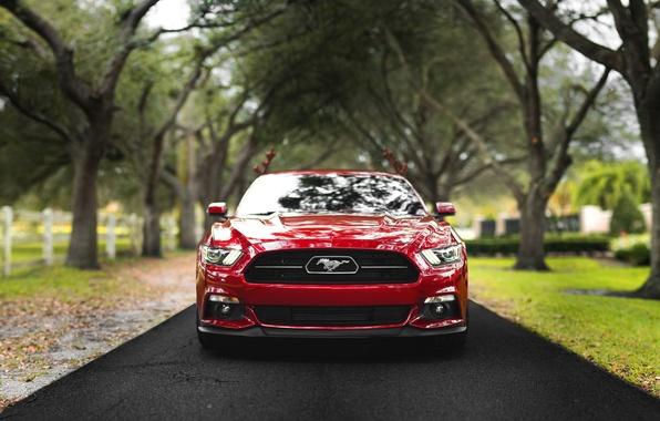 Картинка дорога, деревья, фары, лошадь, забор, Mustang, Ford, спереди, фермы
