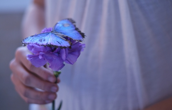 Картинка фиолетовый, девушка, цветы, фон, обои, бабочка, рука, красиво, цветочек