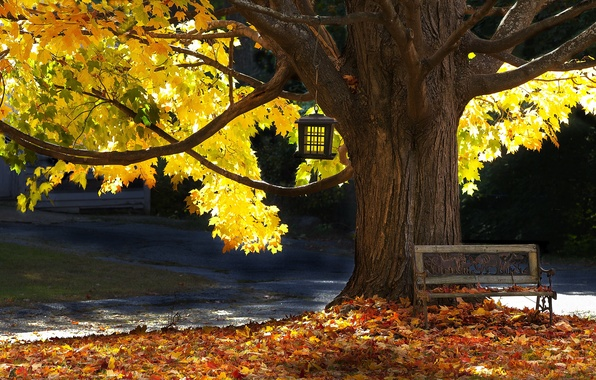 Картинка осень, дерево, скамья