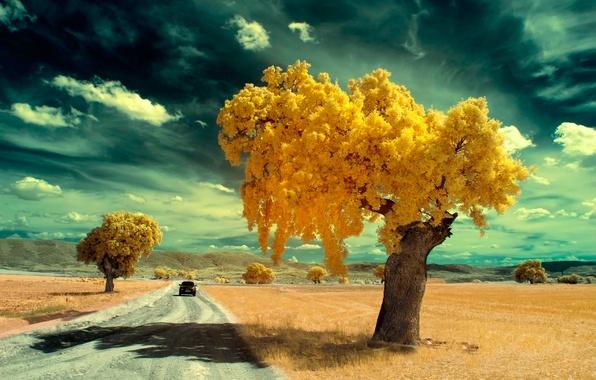 Картинка дорога, машина, деревья, фильтр