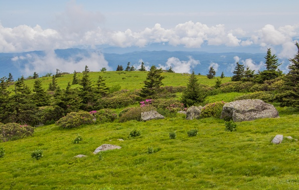 Картинка поле, небо, облака, деревья, цветы, горы, камни, холмы, ель, луг
