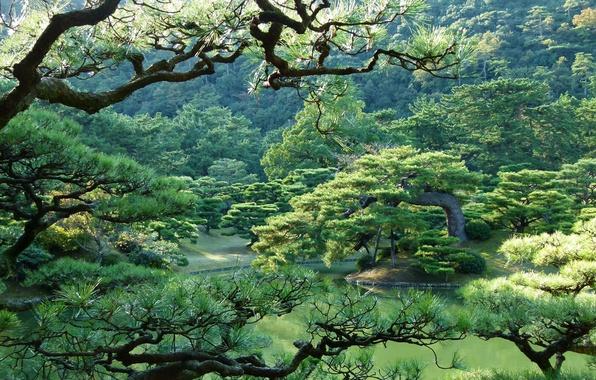 Япония пейзажи обои на рабочий стол 7