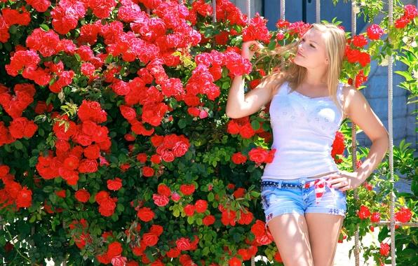 Картинка лето, девушка, солнце, цветы, поза, модель, шорты, куст, розы, сад, майка, фигура, блондинка, красные, Alessandra …