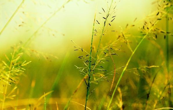Картинка макро, зеленый, фон, widescreen, обои, растительность, растение, размытие, wallpaper, широкоформатные, background, macro, fon, полноэкранные, HD …