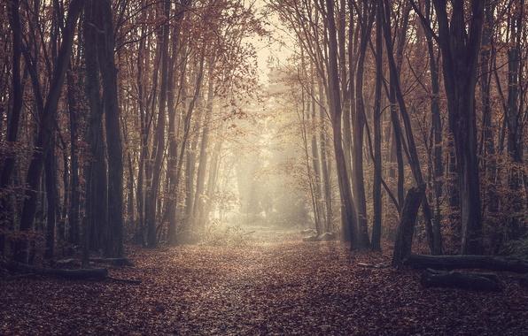 Картинка дорога, лес, природа, листва