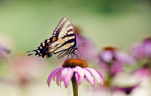 Картинка цветок, лето, макро, бабочка