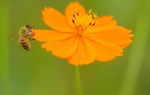 Цветок и пчела картинки