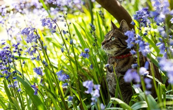 Картинка кошка, цветы, природа, колокольчики