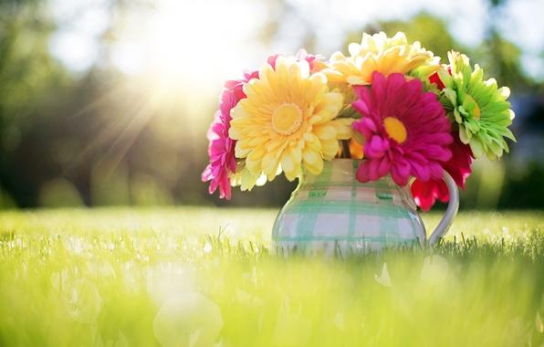 Картинка трава, солнце, свет, цветы, природа, букет, весна, кувшин, боке, Герберы