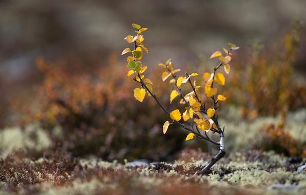 Картинка осень, листья, макро, дерево, земля, мох