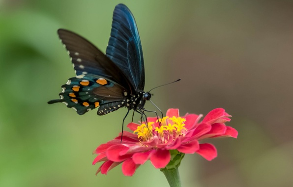 Картинка цветок, бабочка, краски, крылья, лепестки, мотылек
