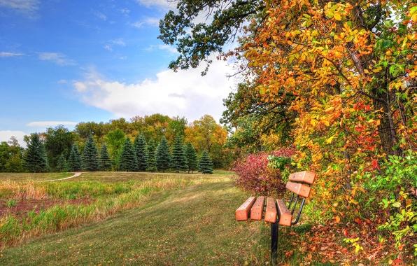 Картинка осень, лес, небо, трава, деревья, парк, скамья