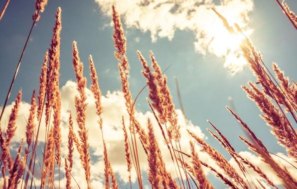 Картинка небо, Поле, воздух, Ветер, колосья, Россия, Казань, Ввысь