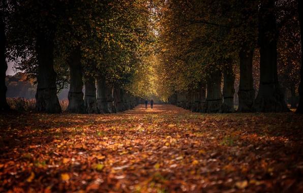 Картинка осень, парк, люди