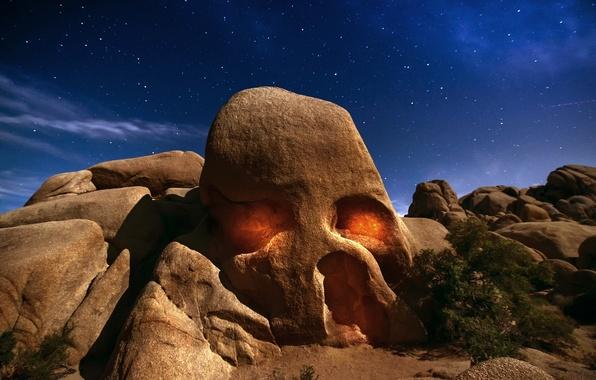 Картинка небо, звезды, свет, ночь, скала, пустыня, Череп, Калифорния, США, кусты, дерево джошуа, штат